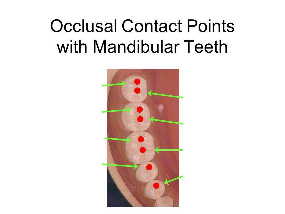 Occlusal Contact Points with Mandibular Teeth DL Cusp Third Molar DL Cusp Second Molar DL Cusp First Molar ML Cusp Third Molar ML Cusp Second Molar ML Cusp First Molar L Cusp Second Premolar L Cusp First Premolar