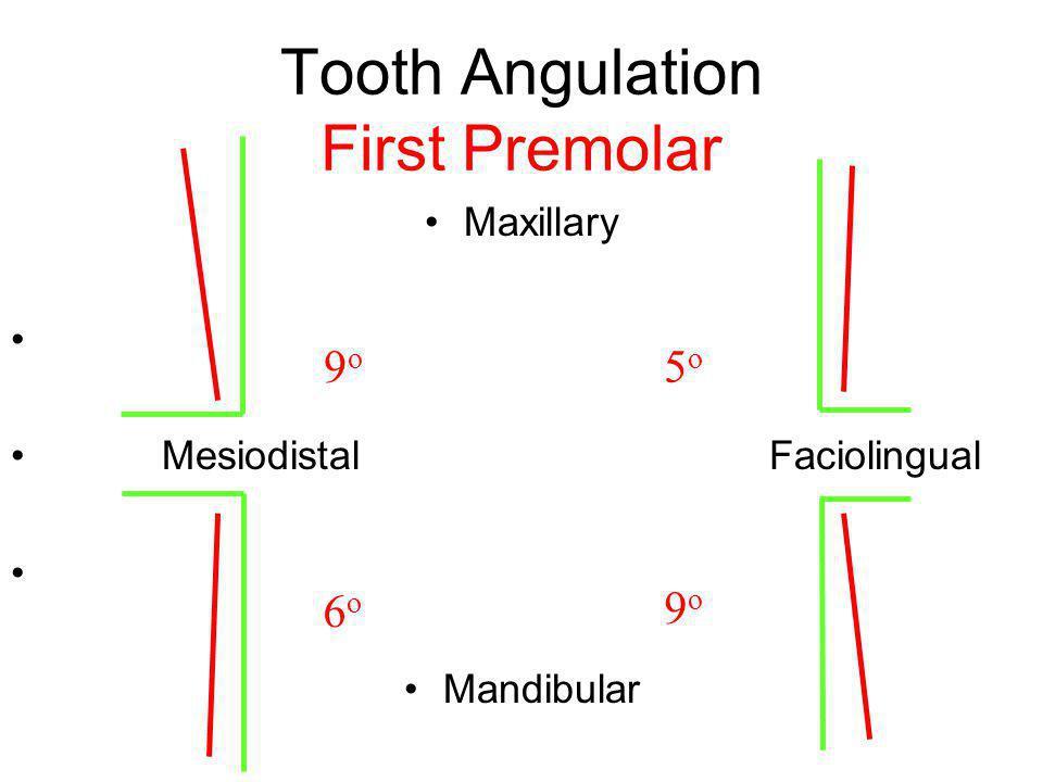 Tooth Angulation First Premolar Maxillary Mesiodistal Faciolingual Mandibular 9o9o 5o5o 6o6o 9o9o