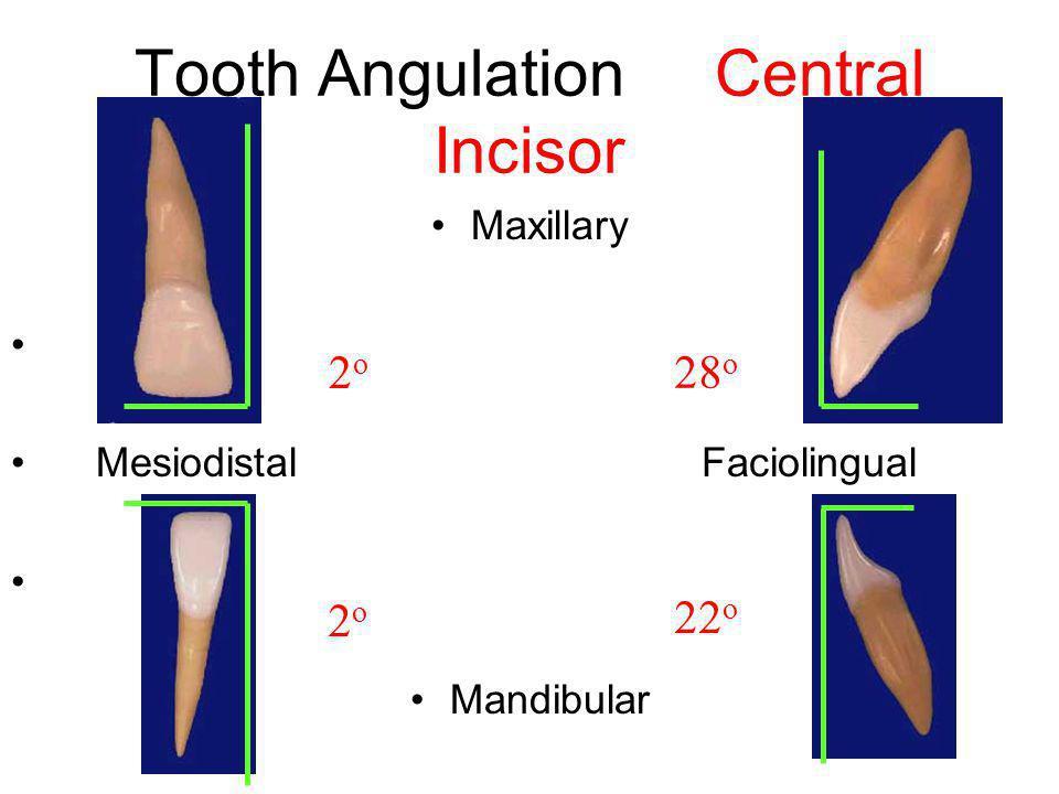 Tooth Angulation Central Incisor Maxillary Mesiodistal Faciolingual Mandibular 2o2o 28 o 2o2o 22 o