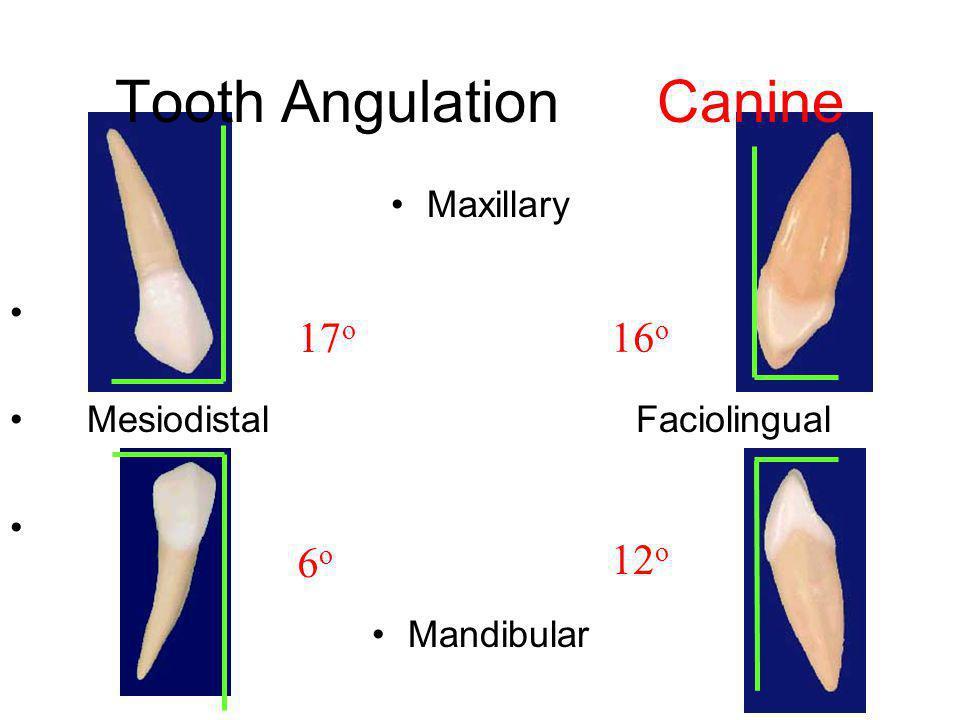 Tooth Angulation Canine Maxillary Mesiodistal Faciolingual Mandibular 17 o 16 o 6o6o 12 o