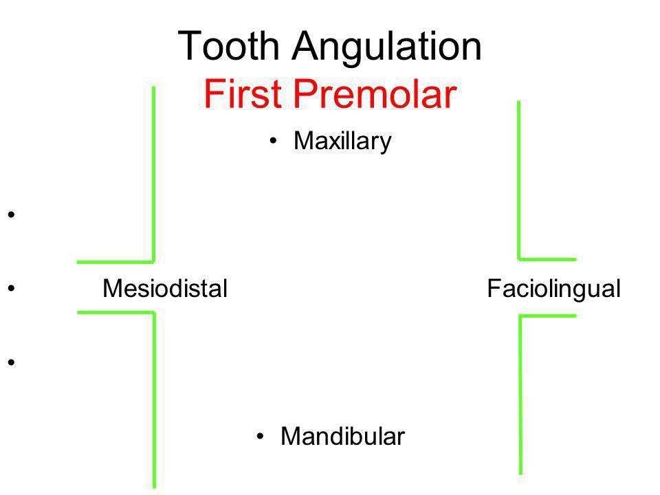 Tooth Angulation First Premolar Maxillary Mesiodistal Faciolingual Mandibular