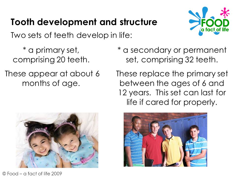 © Food – a fact of life 2009 Tooth development and structure Two sets of teeth develop in life: * a primary set, comprising 20 teeth.