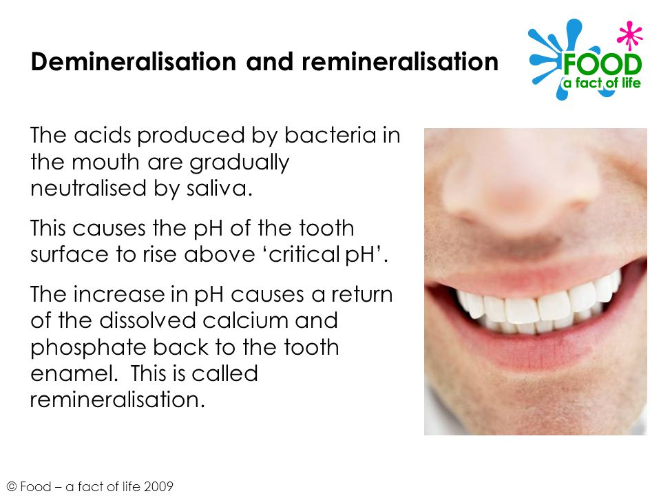 © Food – a fact of life 2009 Demineralisation and remineralisation The acids produced by bacteria in the mouth are gradually neutralised by saliva. Th