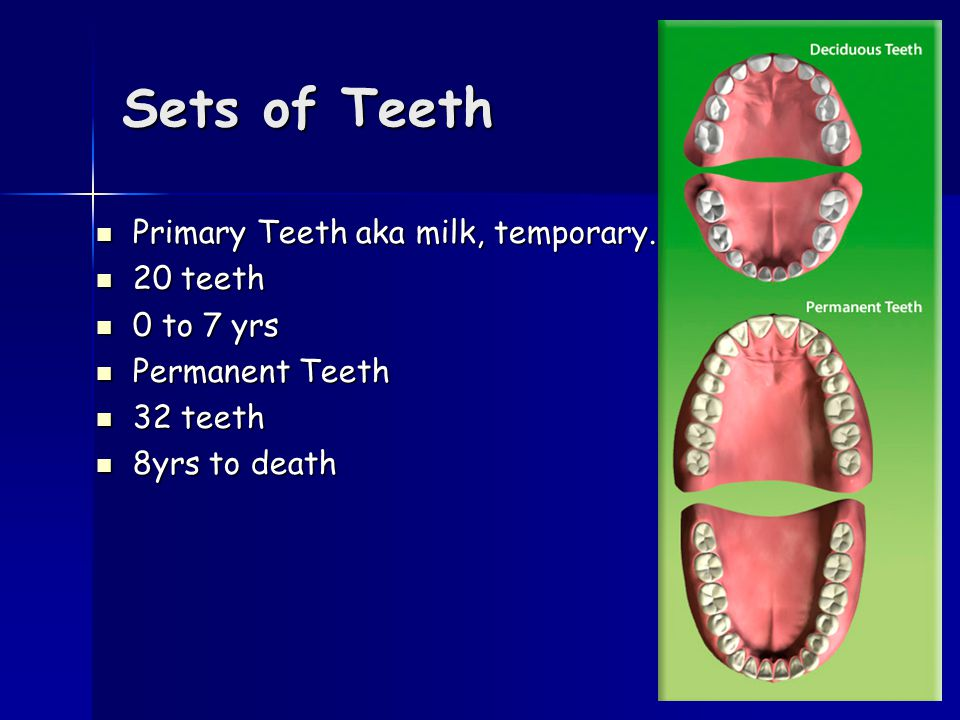 Types and functions of teeth TypesNumberFunction Incisor8 Cut & bite Canine4Tear Premolar8 Chew & grind Molar12