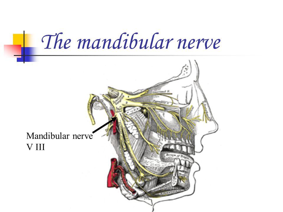 Mandibular nerve V III