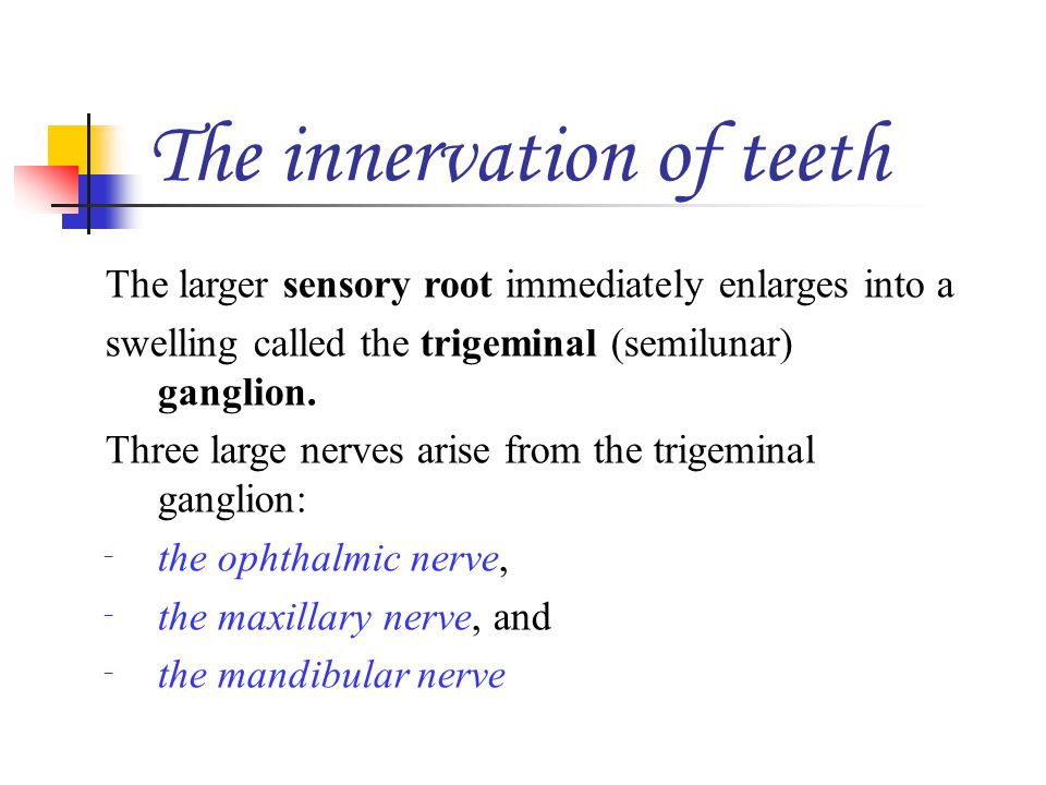 The larger sensory root immediately enlarges into a swelling called the trigeminal (semilunar) ganglion. Three large nerves arise from the trigeminal