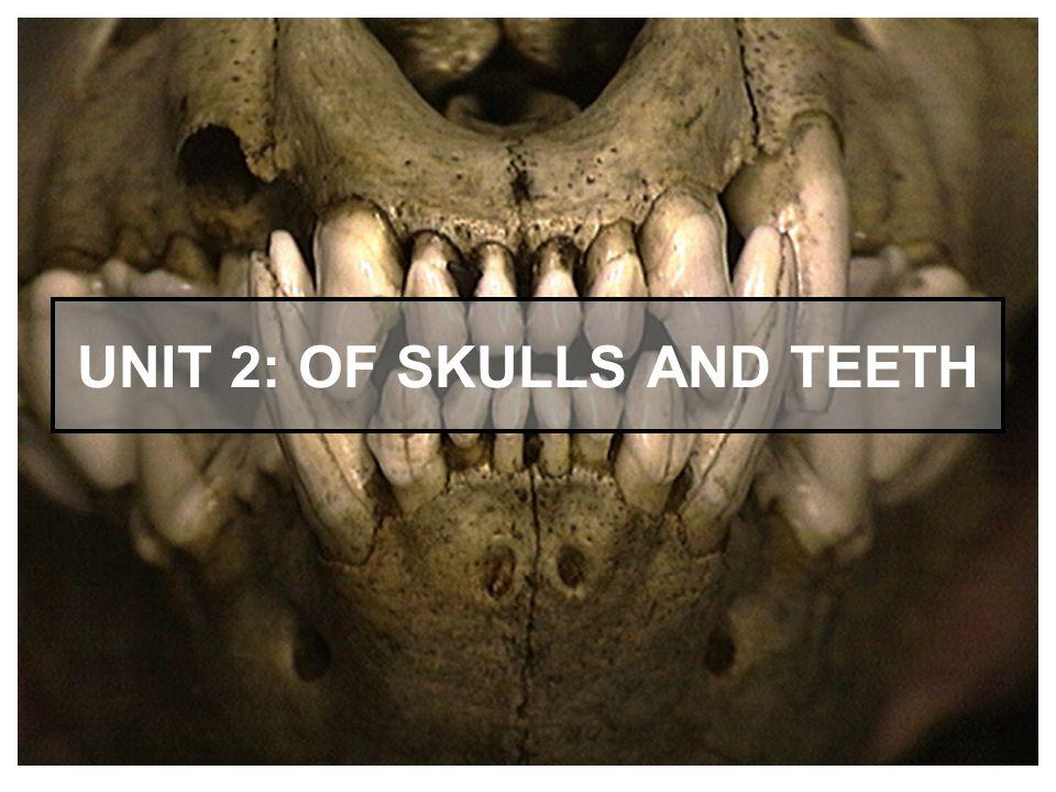 2 UNIT 2: OF SKULLS AND TEETH