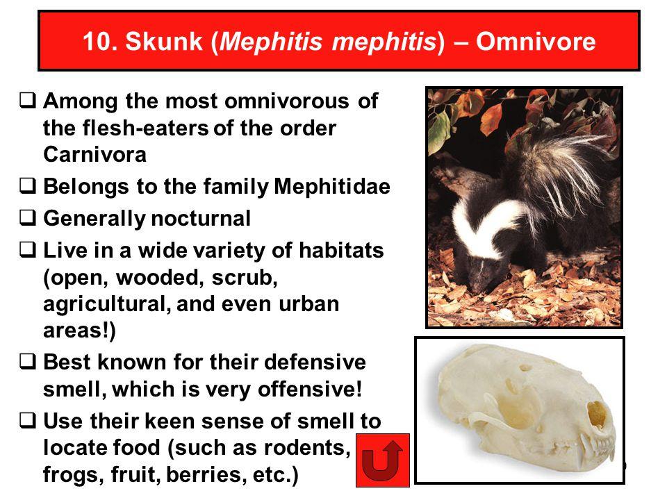 29 10. Skunk (Mephitis mephitis) – Omnivore Among the most omnivorous of the flesh-eaters of the order Carnivora Belongs to the family Mephitidae Gene