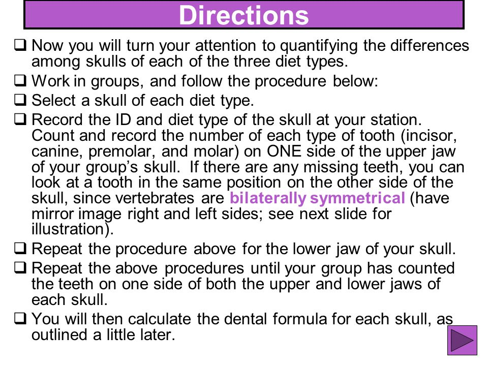 43 Directions Now you will turn your attention to quantifying the differences among skulls of each of the three diet types. Work in groups, and follow