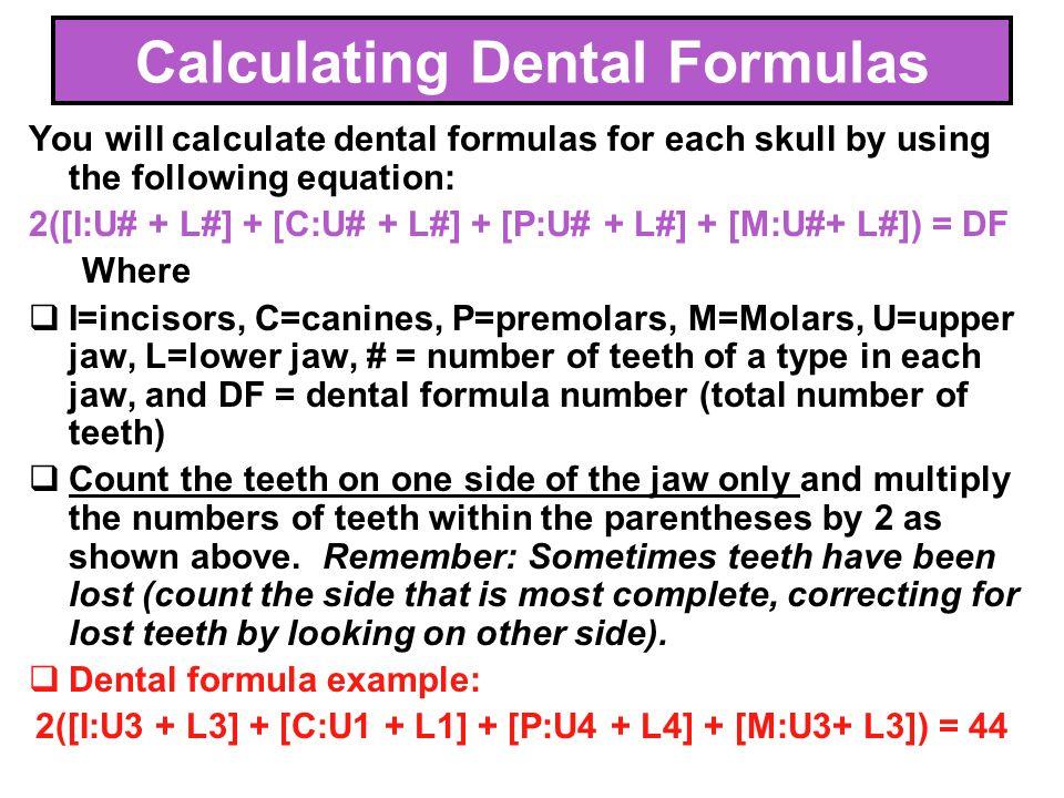 45 You will calculate dental formulas for each skull by using the following equation: 2([I:U# + L#] + [C:U# + L#] + [P:U# + L#] + [M:U#+ L#]) = DF Whe