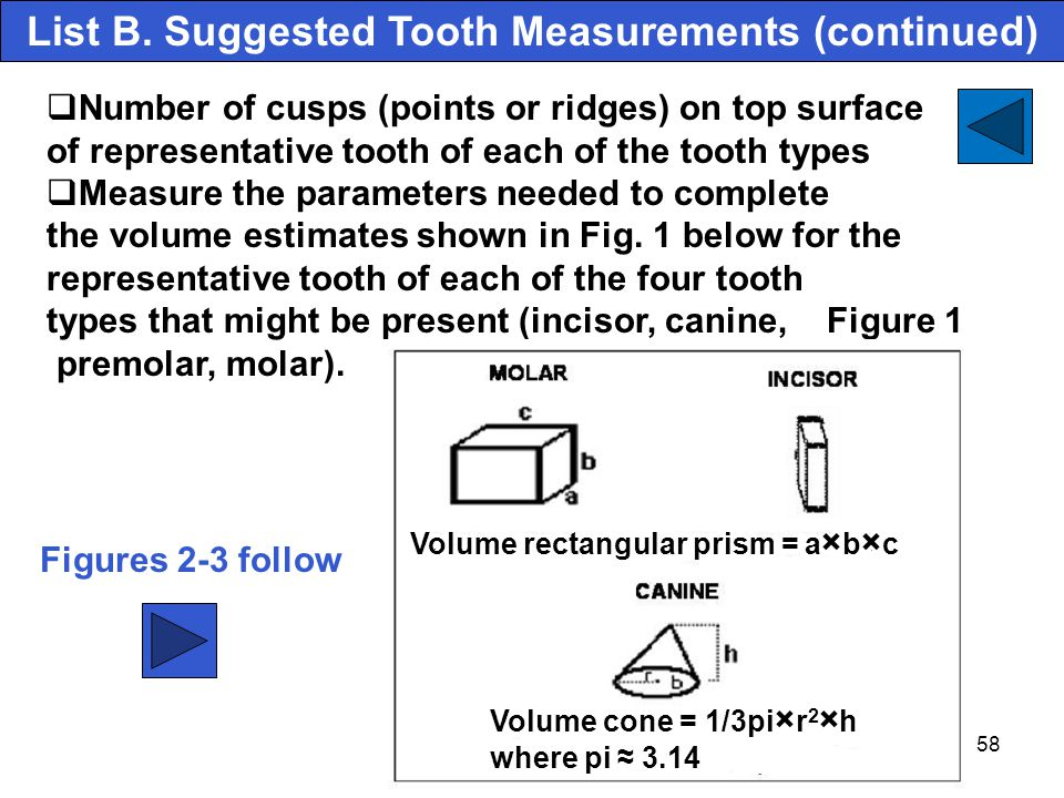 58 Number of cusps (points or ridges) on top surface of representative tooth of each of the tooth types Measure the parameters needed to complete the