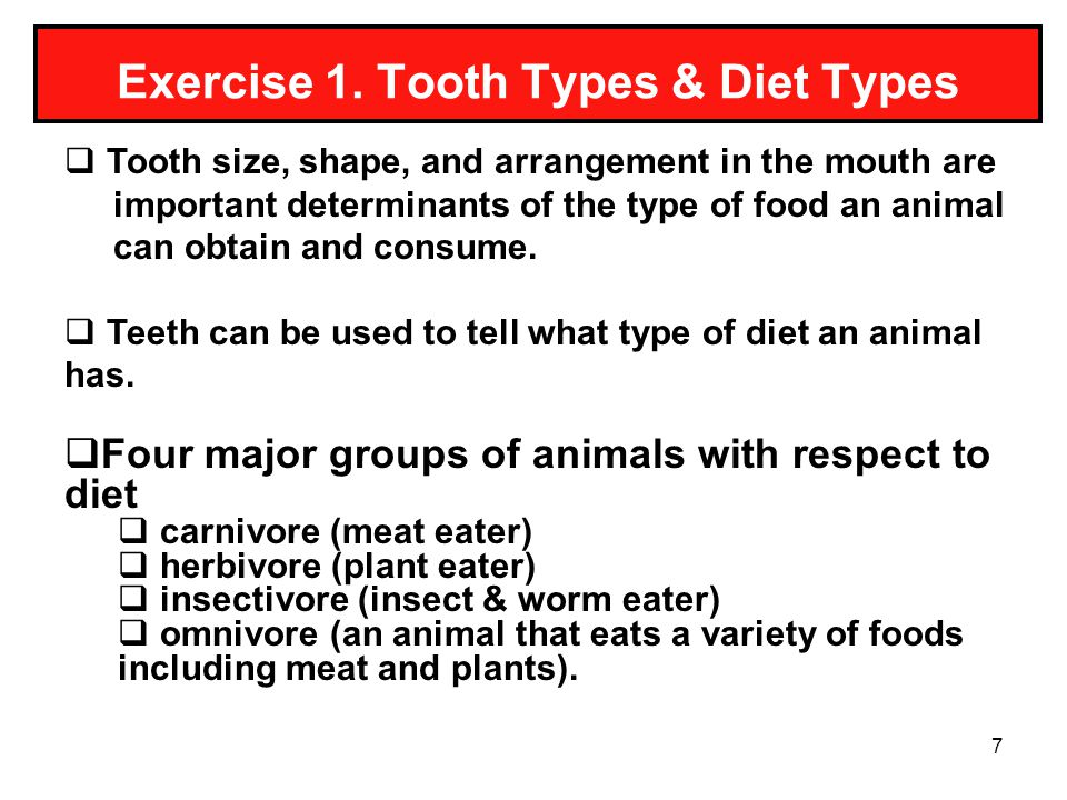 7 Exercise 1. Tooth Types & Diet Types Tooth size, shape, and arrangement in the mouth are important determinants of the type of food an animal can ob