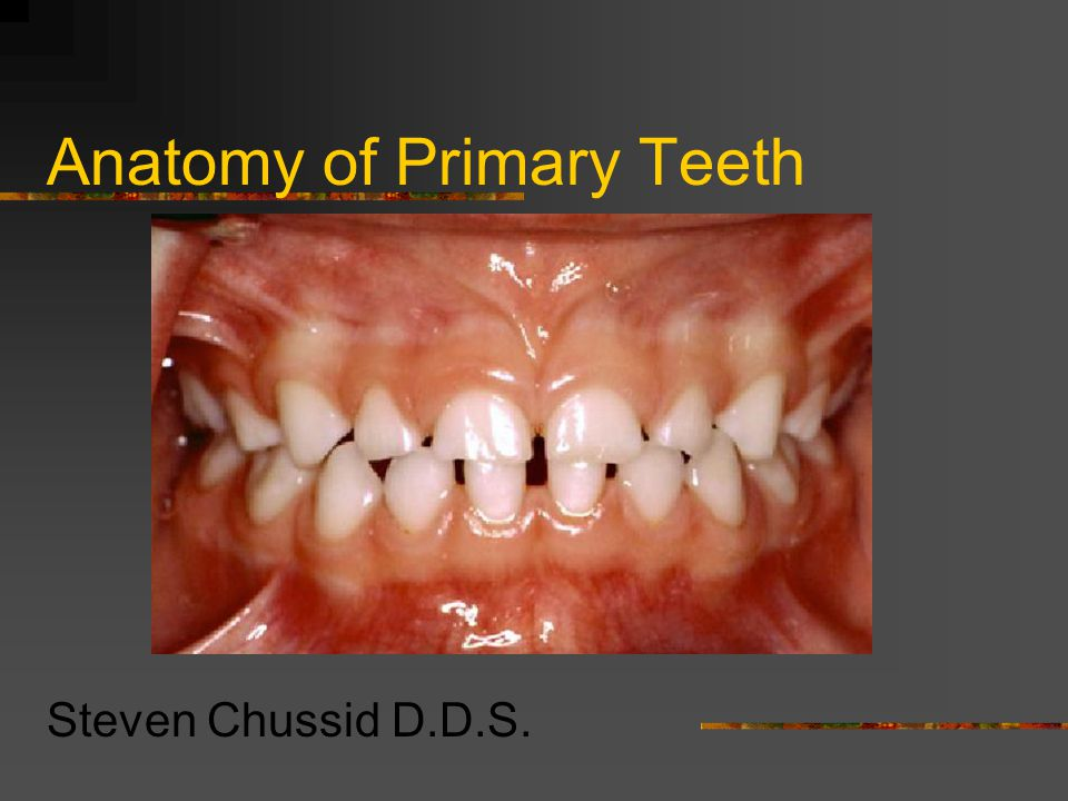Anatomy of Primary Teeth Steven Chussid D.D.S.