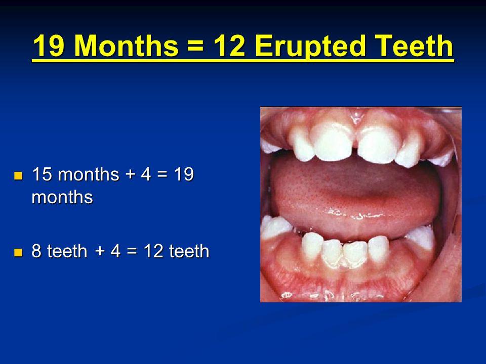 23 Months = 16 Erupted Teeth 19 months + 4 = 23 months 19 months + 4 = 23 months 12 teeth + 4 = 16 teeth 12 teeth + 4 = 16 teeth