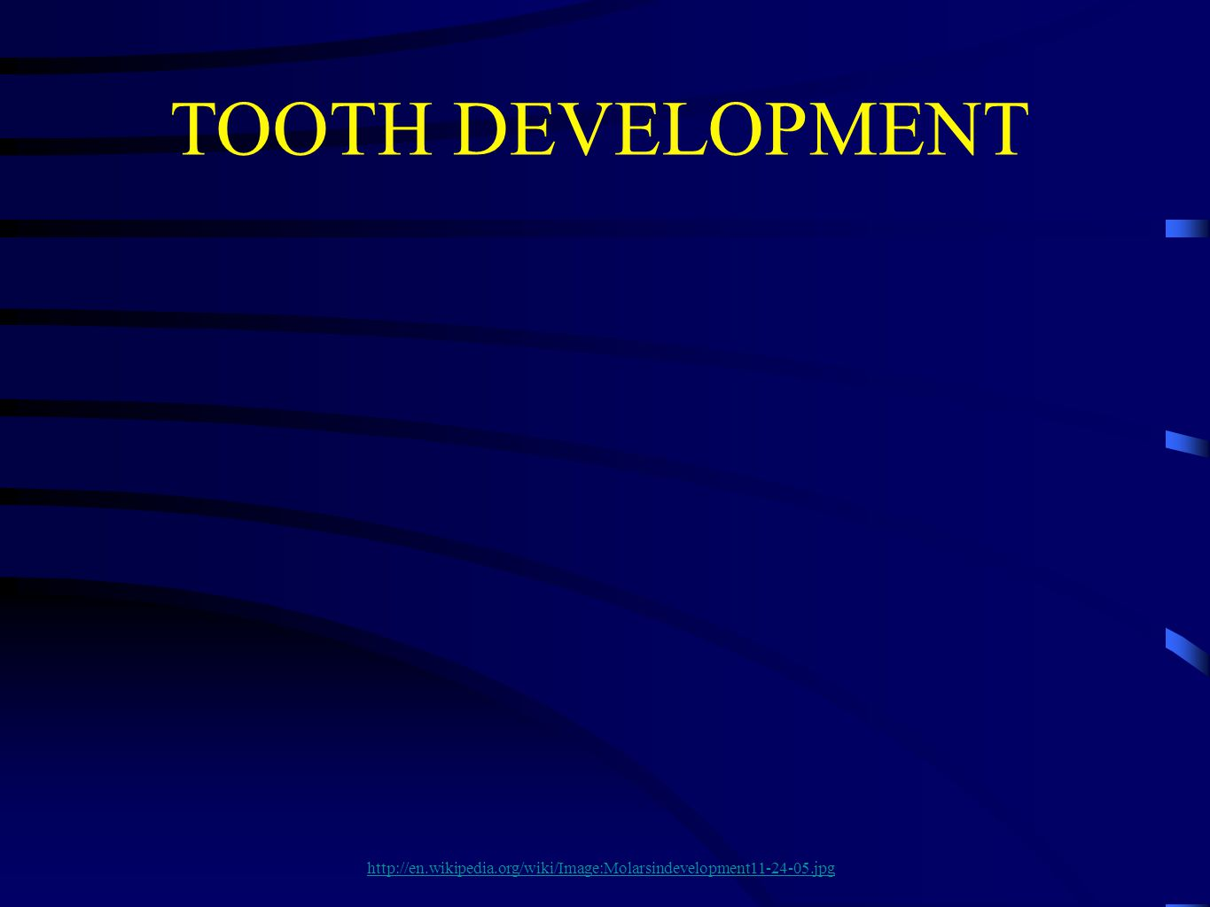 7 There are a number of terminologies that are used to describe the early development of teeth prior to the cap stage.