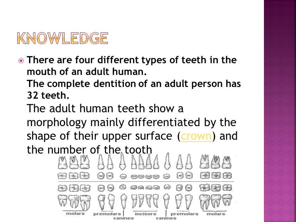 There are four different types of teeth in the mouth of an adult human. The complete dentition of an adult person has 32 teeth. The adult human teeth