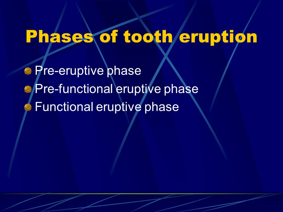 Phases of tooth eruption Pre-eruptive phase Pre-functional eruptive phase Functional eruptive phase