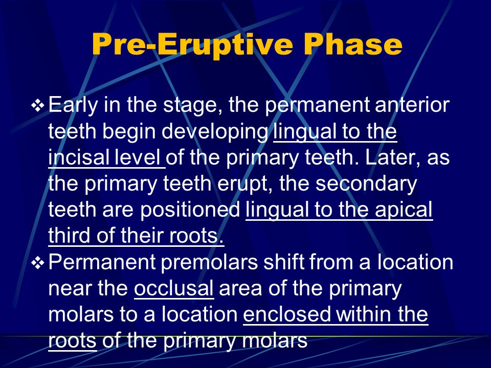 Pre-Eruptive Phase Early in the stage, the permanent anterior teeth begin developing lingual to the incisal level of the primary teeth. Later, as the
