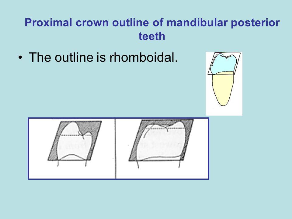 Proximal crown outline of mandibular posterior teeth The outline is rhomboidal.