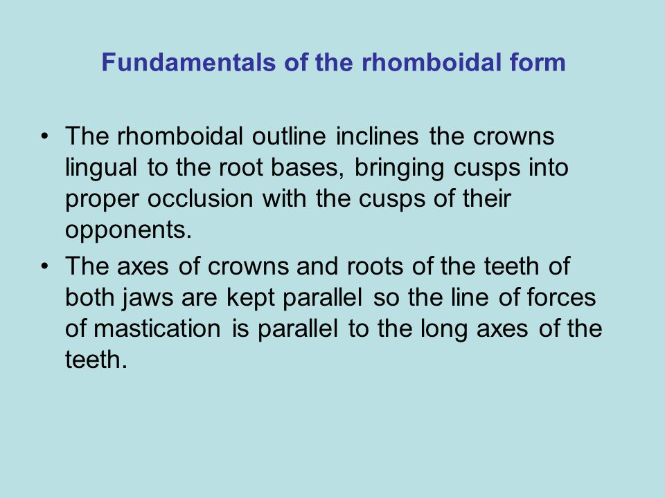 Fundamentals of the rhomboidal form The rhomboidal outline inclines the crowns lingual to the root bases, bringing cusps into proper occlusion with th