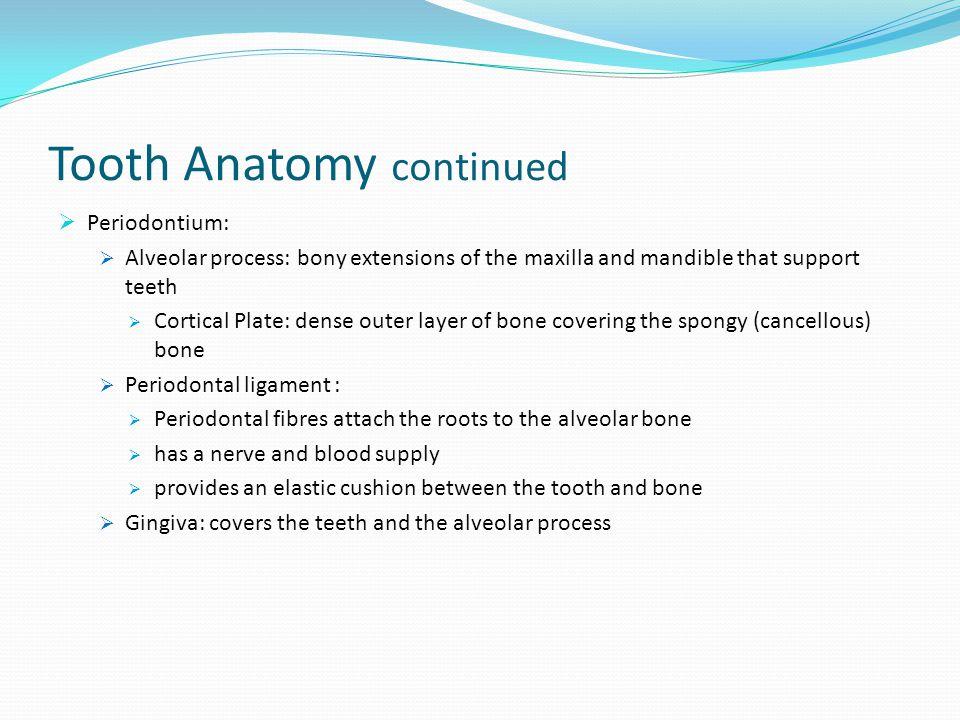 Dentine Enamel Dentinal Tubules Cementum Pulp Alveolar Process Cortical Plate Spongy Bone Periodontal Ligaments