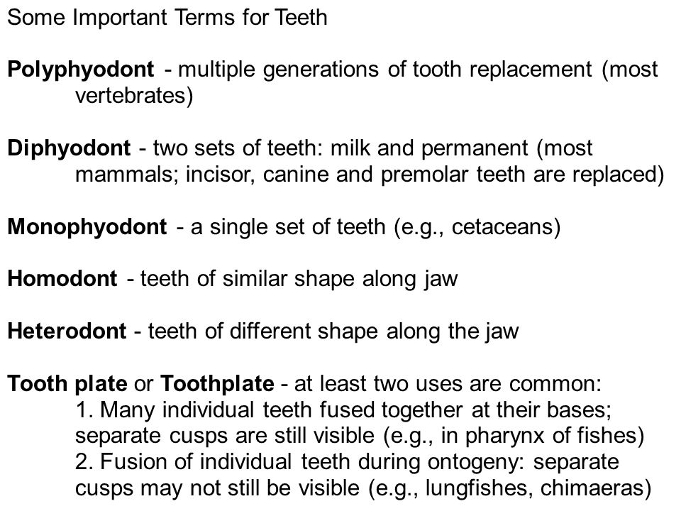 Some Important Terms for Teeth Polyphyodont - multiple generations of tooth replacement (most vertebrates) Diphyodont - two sets of teeth: milk and permanent (most mammals; incisor, canine and premolar teeth are replaced) Monophyodont - a single set of teeth (e.g., cetaceans) Homodont - teeth of similar shape along jaw Heterodont - teeth of different shape along the jaw Tooth plate or Toothplate - at least two uses are common: 1.