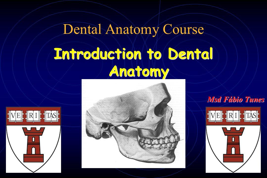 Dental Anatomy Course Introduction to Dental Anatomy Msd Fábio Tunes