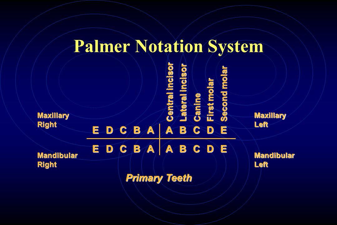 Palmer Notation System EDCBAABCDE Maxillary Right Mandibular Right Central incisor Lateral incisor Canine First molar Second molar Maxillary Left Mandibular Left EDCBAABCDE Primary Teeth