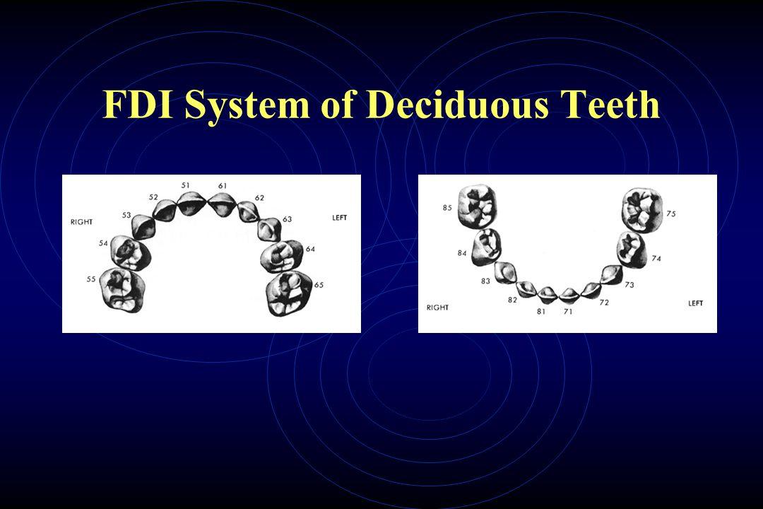 FDI System of Deciduous Teeth