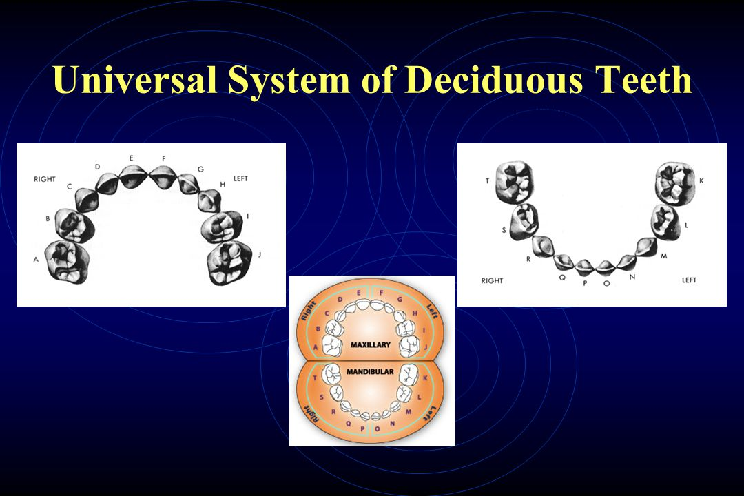 Universal System of Deciduous Teeth
