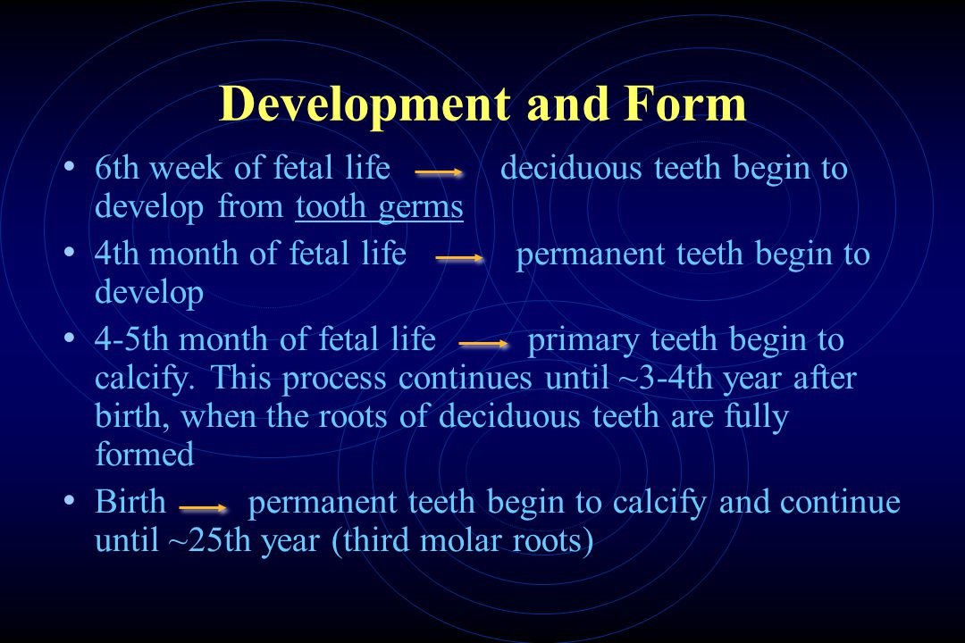 Development and Form 6th week of fetal life deciduous teeth begin to develop from tooth germs 4th month of fetal life permanent teeth begin to develop 4-5th month of fetal life primary teeth begin to calcify.