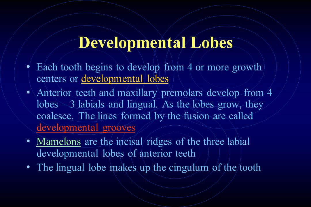 Developmental Lobes Each tooth begins to develop from 4 or more growth centers or developmental lobes Anterior teeth and maxillary premolars develop from 4 lobes – 3 labials and lingual.