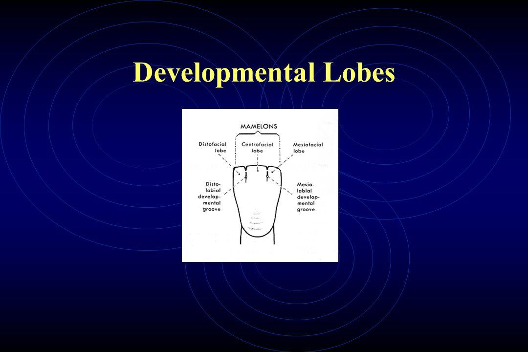 Developmental Lobes