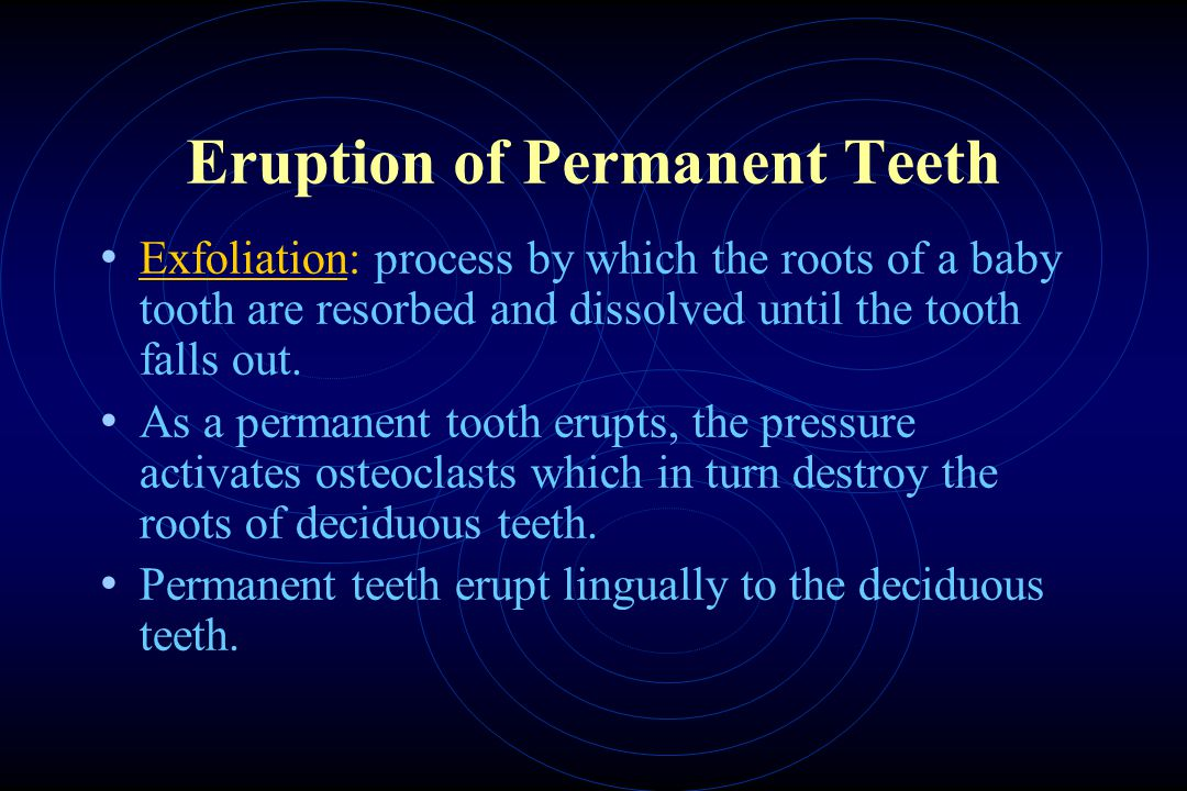 Eruption of Permanent Teeth Exfoliation: process by which the roots of a baby tooth are resorbed and dissolved until the tooth falls out.