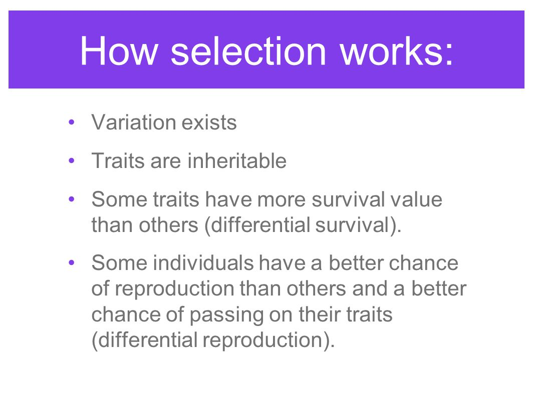 How selection works: Variation exists Traits are inheritable Some traits have more survival value than others (differential survival). Some individual