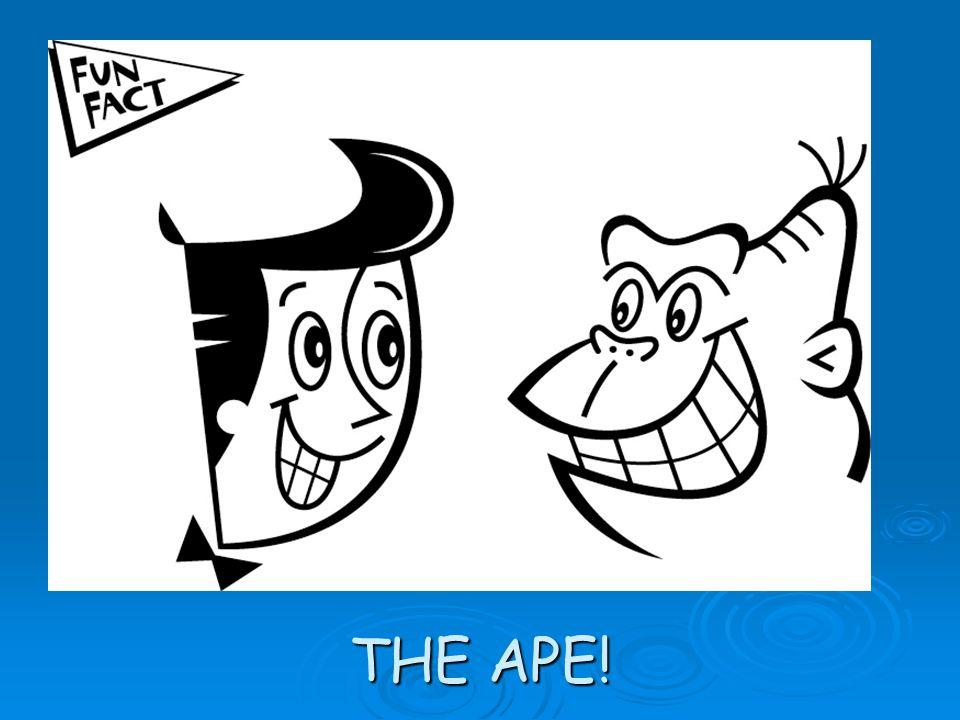 THE APE!