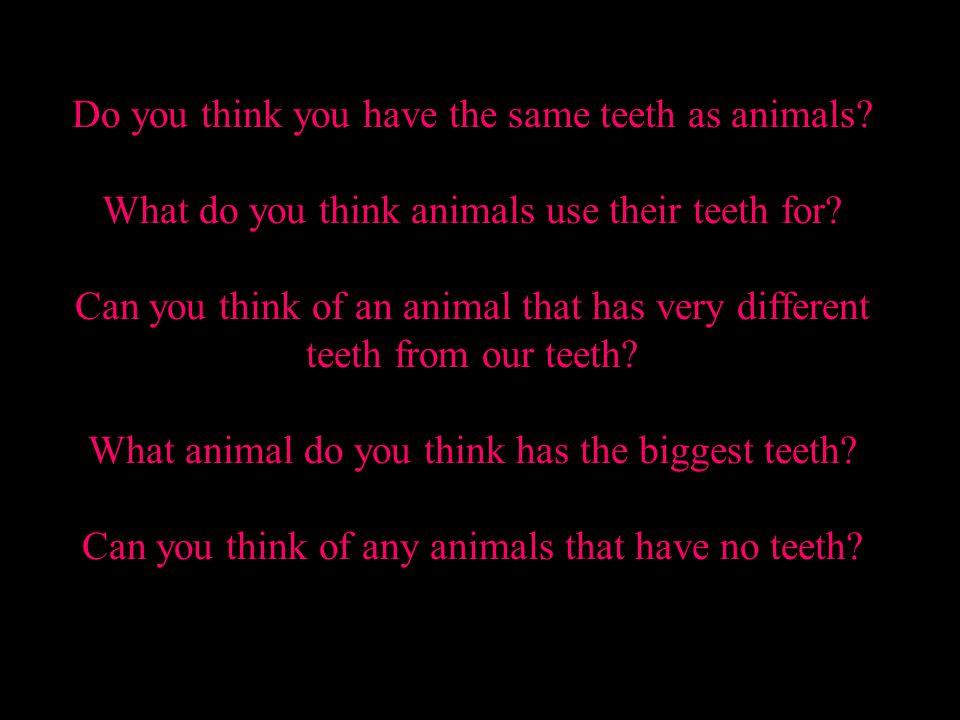 Human teeth vs. Animal teeth
