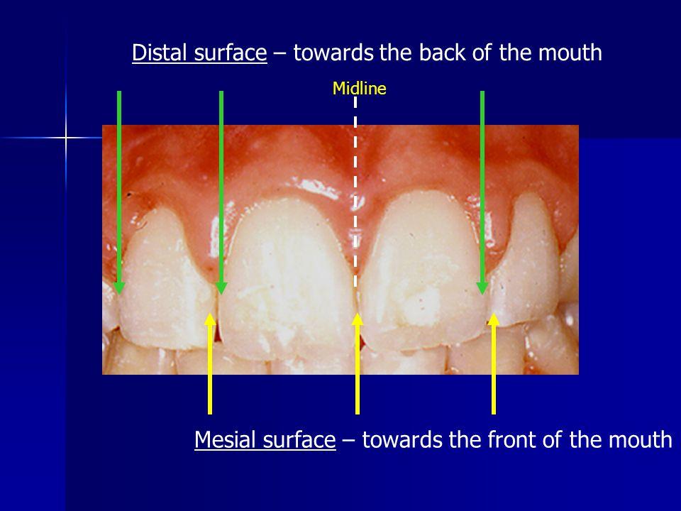 DENTAL CARIES Host Bacteria Substrate TEETH MUTAN STREPTOCOCCI LACTOBACILLI FRUCTOSE SUCROSE Dental Caries Process