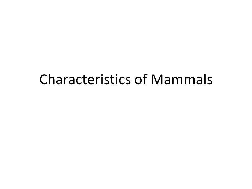 Characteristics of Mammals