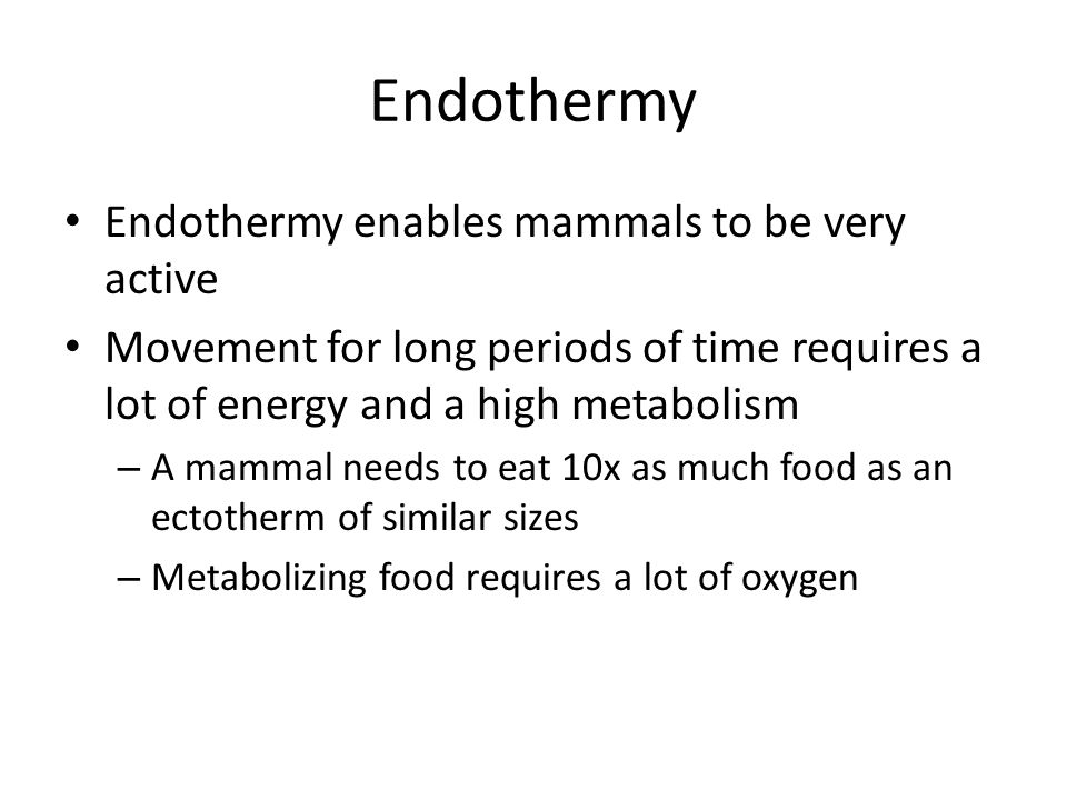 Endothermy Endothermy enables mammals to be very active Movement for long periods of time requires a lot of energy and a high metabolism – A mammal ne