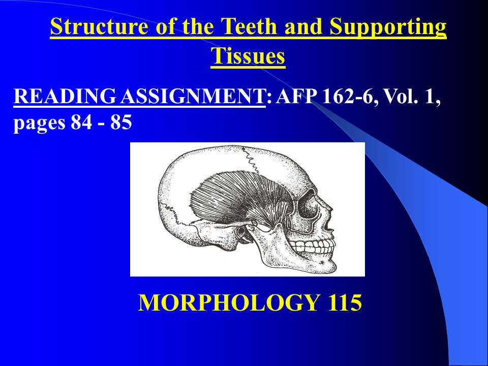 Teeth: A tooth is divided into two parts, the crown and the root.