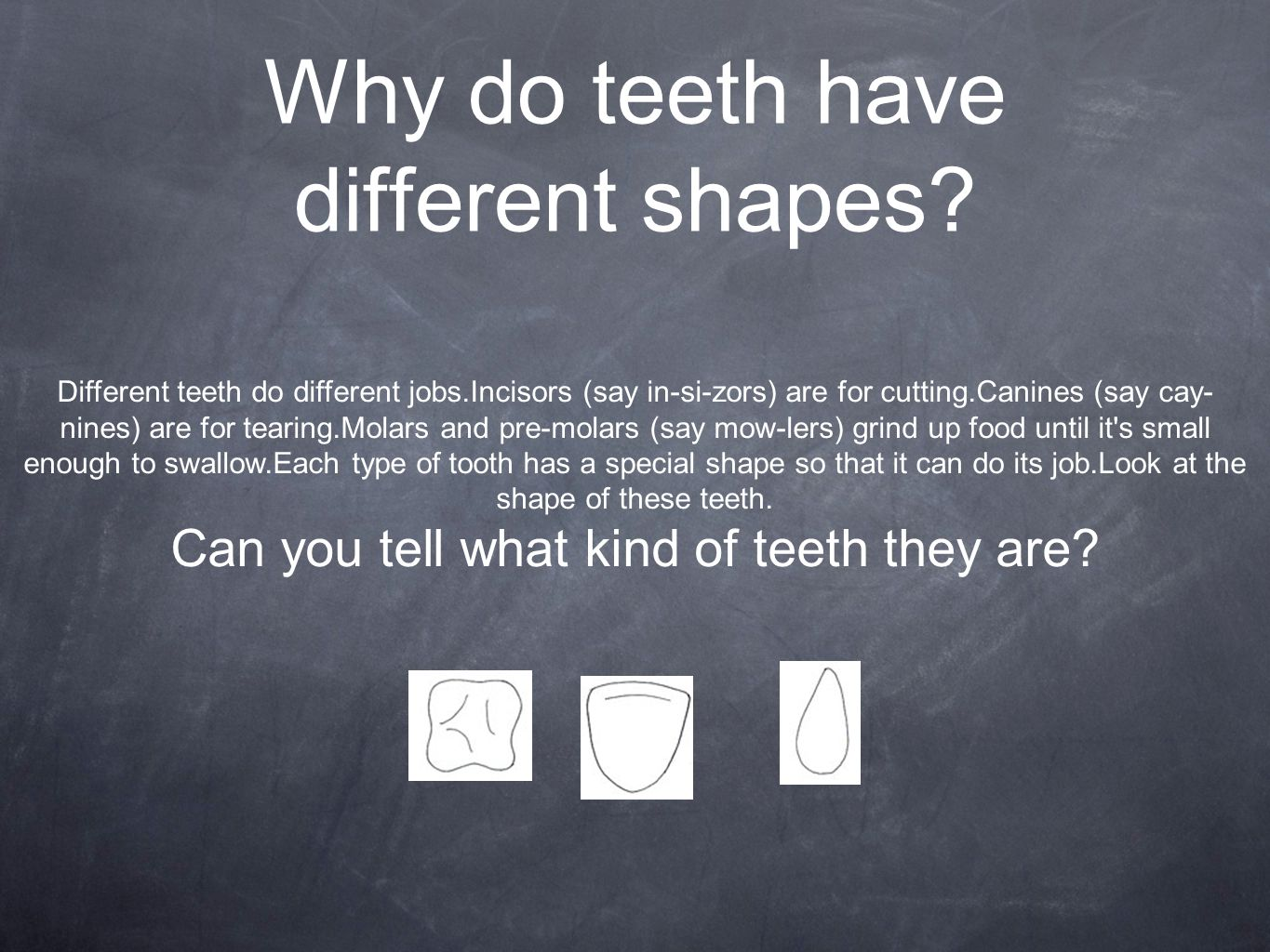 Why do teeth have different shapes.