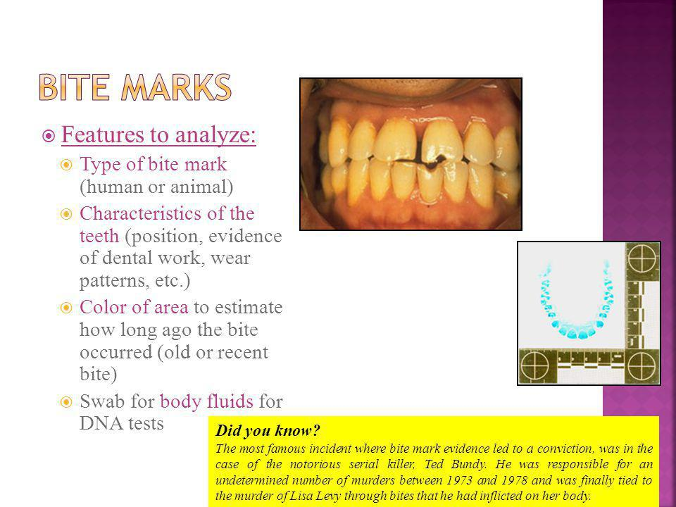 Features to analyze: Type of bite mark (human or animal) Characteristics of the teeth (position, evidence of dental work, wear patterns, etc.) Color of area to estimate how long ago the bite occurred (old or recent bite) Swab for body fluids for DNA tests Did you know.