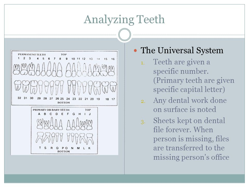 Analyzing Teeth The Universal System 1. Teeth are given a specific number. (Primary teeth are given specific capital letter) 2. Any dental work done o