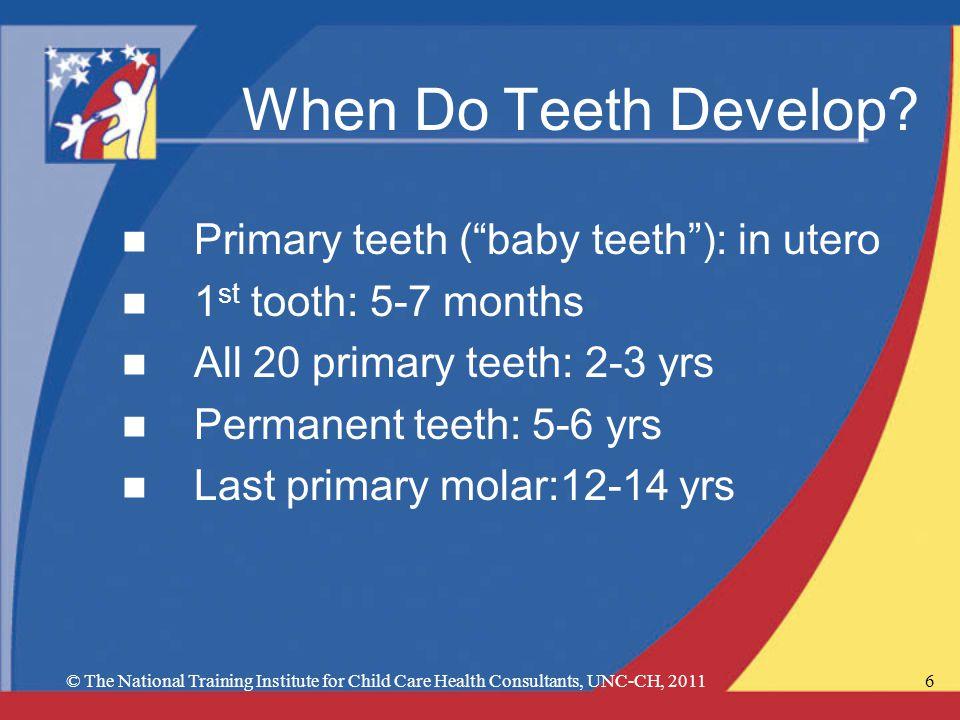 6 When Do Teeth Develop? n Primary teeth (baby teeth): in utero n 1 st tooth: 5-7 months n All 20 primary teeth: 2-3 yrs n Permanent teeth: 5-6 yrs n