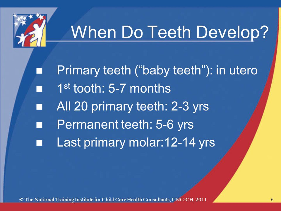6 When Do Teeth Develop.