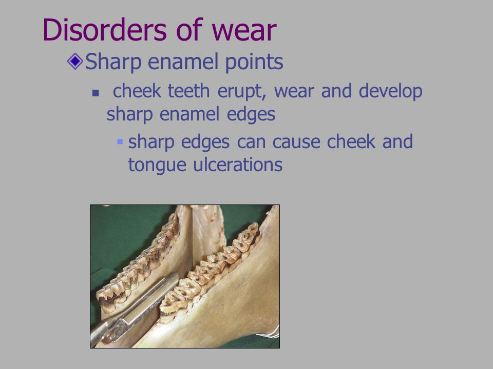 Disorders of wear Sharp enamel points cheek teeth erupt, wear and develop sharp enamel edges sharp edges can cause cheek and tongue ulcerations