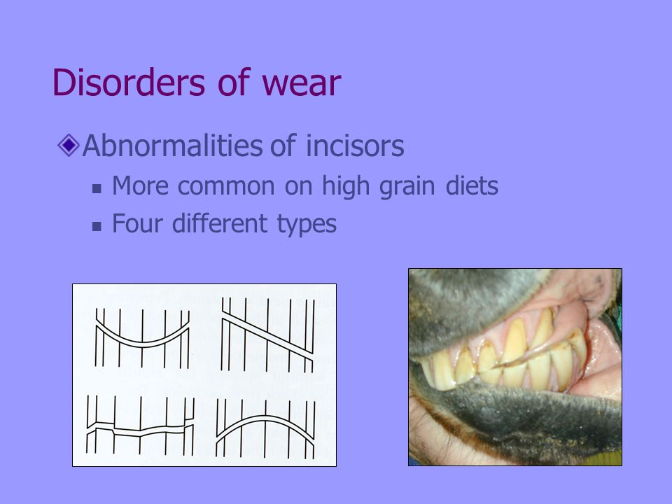 Disorders of wear Abnormalities of incisors More common on high grain diets Four different types