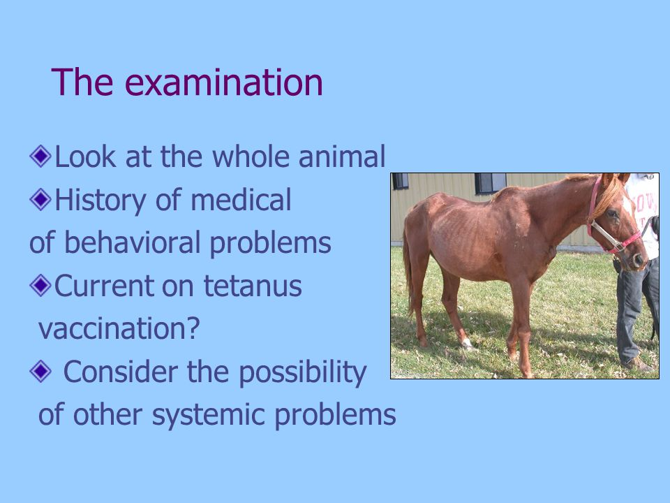 The examination Look at the whole animal History of medical of behavioral problems Current on tetanus vaccination? Consider the possibility of other s