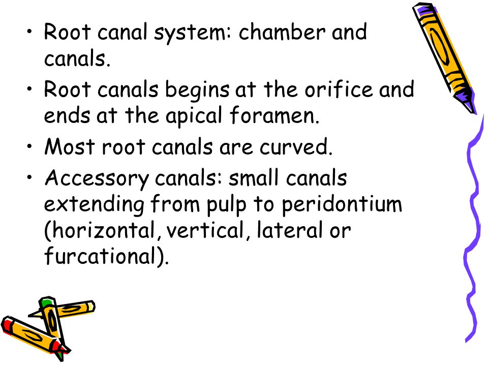 Apical root anatomy
